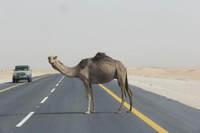 Les Saoudiens dans les mall, sur la route et avec moi