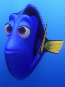 faire du snorkeling à Oman et se retrouver dans le monde de Nemo a nager avec de tortues