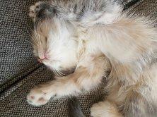 il dort comment le chat - elle a 40 ans