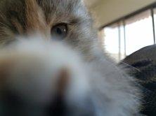 le jour où l'on a adopté un chaton